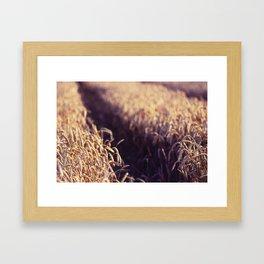 Golden Summer Field Framed Art Print