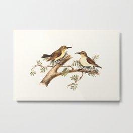 Sunbirds (Nectarinia) Metal Print