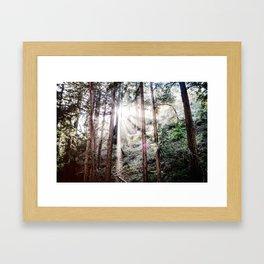 Big Sur Forest Sunbeams Framed Art Print