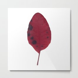 Leaf autumn Metal Print