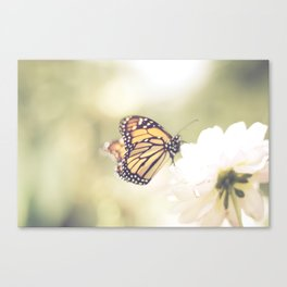 Love of a butterfly Canvas Print