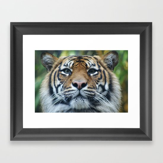 Tigers Glorious Stare Framed Art Print