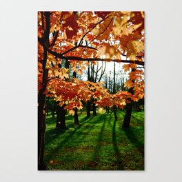 Orange fall Canvas Print