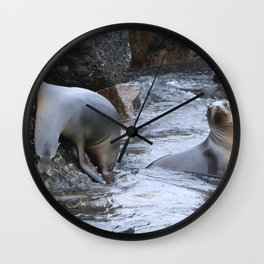 California Sea Lions in Monterey Bay Wall Clock