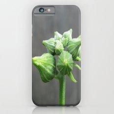 beauty in the mundane - luffa buds iPhone 6 Slim Case