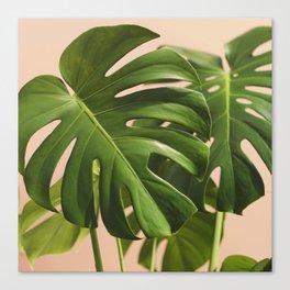 Verdure #2 Canvas Print