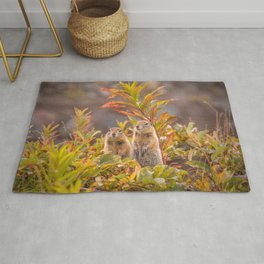 Sweet couple of Arctic ground squirrels in Autumn Rug