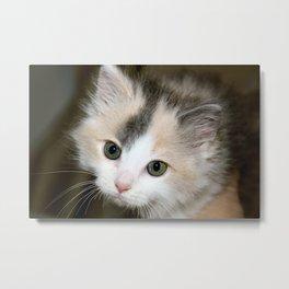Anastasia Rescue Kitten Metal Print