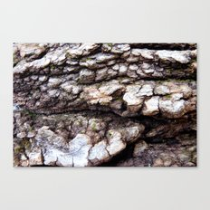 Wood Texture #1 Canvas Print
