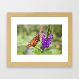 Butterfly in Ometepe, Nicaragua Framed Art Print