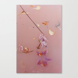 Harry Album Artwork Floral Pink Water Canvas Print