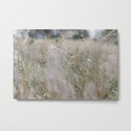 Tall wild grass growing in a meadow Metal Print