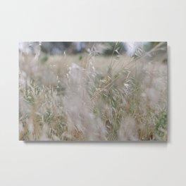 Tall wild grass growing in a meadow Metal Print
