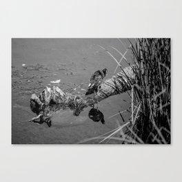 Spiegel / III Canvas Print
