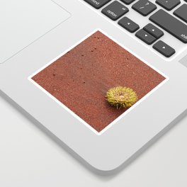 Sea urchin Sticker