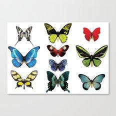 Une armée de papillons Canvas Print