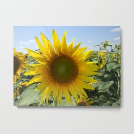Kansas Bright and Colorful Sunflower Metal Print