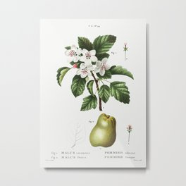 1. Sweet crabapple (Malus coronaria) 2. Apple (Malus dioica) from Traité des Arbres et Arbustes que Metal Print