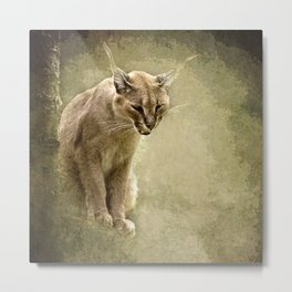 Caracal- wild cat Metal Print