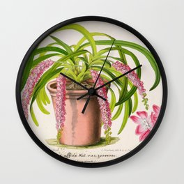 Aerides Affine Var Roseum Vintage Botanical Floral Flower Plant Scientific Wall Clock