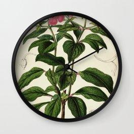 Flower heterocentrum roseum Wall Clock