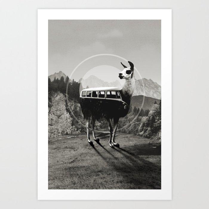 Llama B&W Art Print