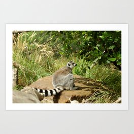 cute lemur Art Print