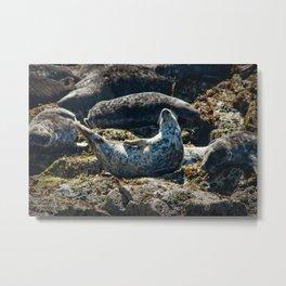 Seal Yoga Metal Print