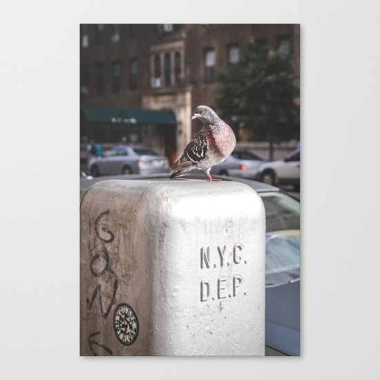 NYC Pigeon Canvas Print