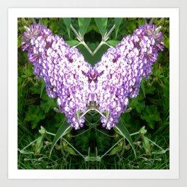 Buddleia Butterfly Art Print
