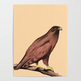 Wild Eagle Poster