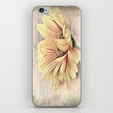 Gerbera iPhone & iPod Skin