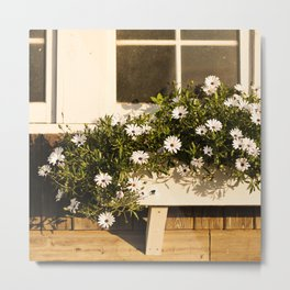 Flower Box Daisies Metal Print