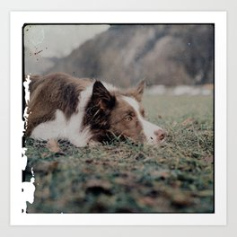 Kiva the dog Art Print