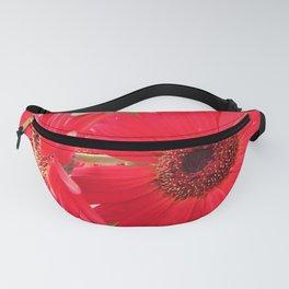 Red Gerbera Daisies Fanny Pack