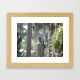 Mocking bird on a fence post Framed Art Print