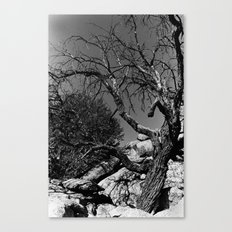 Desolance Canvas Print
