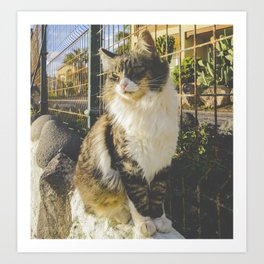 Gato de Lanzarote Art Print