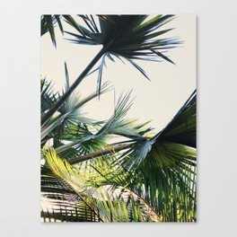 Palm Trees | Lightness Of Being | Meditative State Canvas Print