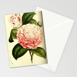 Flower camellia comtesse lavinia maggi0 Stationery Cards