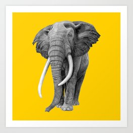 Bull elephant - Drawing In Pencil On Vintage Yellow Art Print