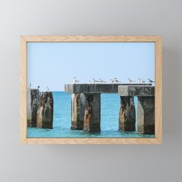 Royal Terns at Boca Grande Beach Framed Mini Art Print