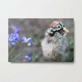 Chick and Violets Metal Print