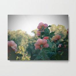 Reaching Roses (Balboa Park) Metal Print