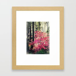 Red in the forest Framed Art Print