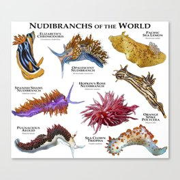 Nudibranchs of the World Canvas Print