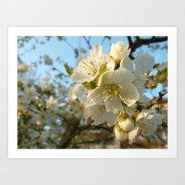 Cherry-tree Art Print