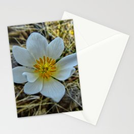 A Ghostly Flower Stationery Cards