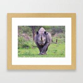 Black Rhino - Walking the Walk Framed Art Print