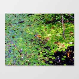 Lonely frog Canvas Print